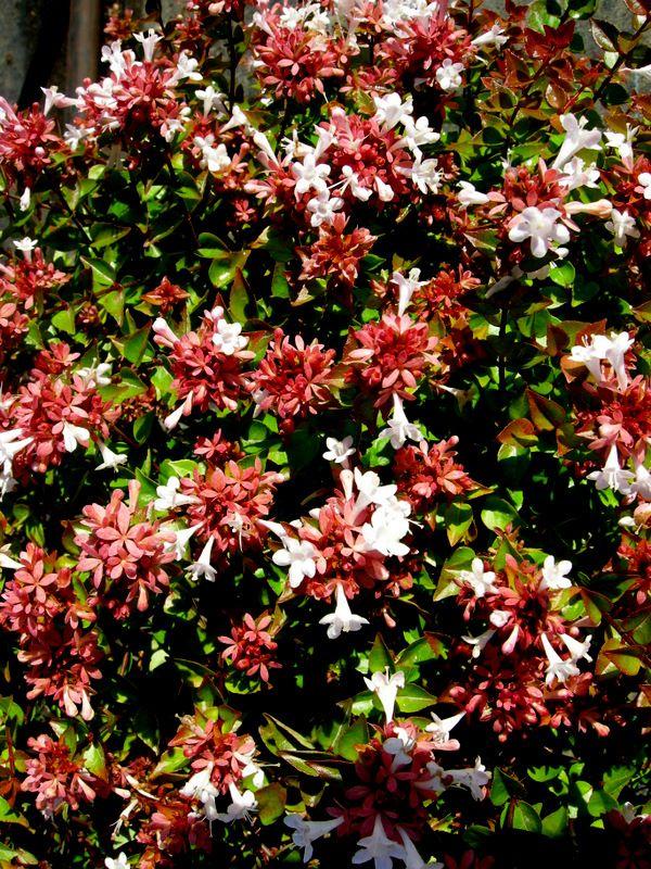 13 best butterfly garden images on pinterest