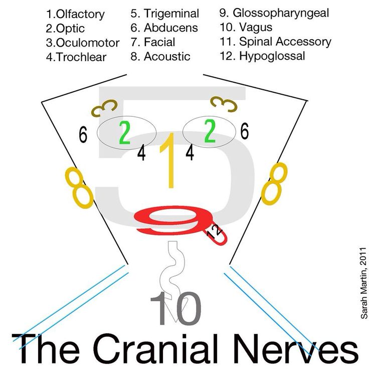 Easy way to remember cranial nerves for National Dental Hygiene Board Exam:)