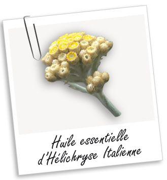 LE SUPER ARNICA DE TOUTE LA FAMILLE (même des bébés)! Huile essentielle Hélichryse Italienne de Corse BIO Aroma-Zone