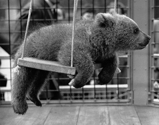 swinging...mono bear