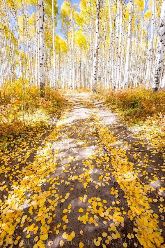 Road to fall (Colorado) by Dan Ballard