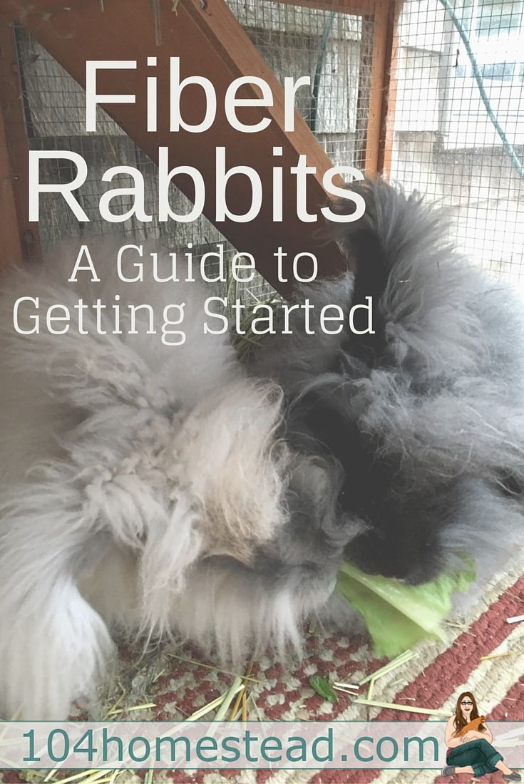 Are you getting ready to add fiber rabbits to your backyard farm? Rabbits are the perfect choice for someone who wants to start producing their own fibers.
