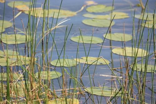 Jackfish Lake, Alberta Canada