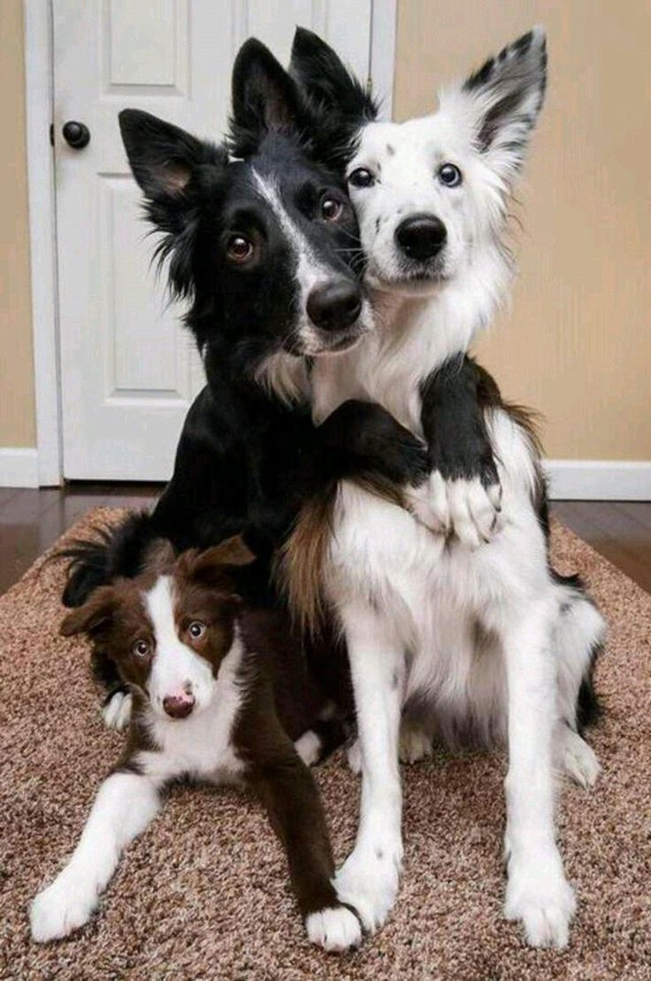 Such a beautiful family photo ❤️ #dogs #dog #animals #animal #pets