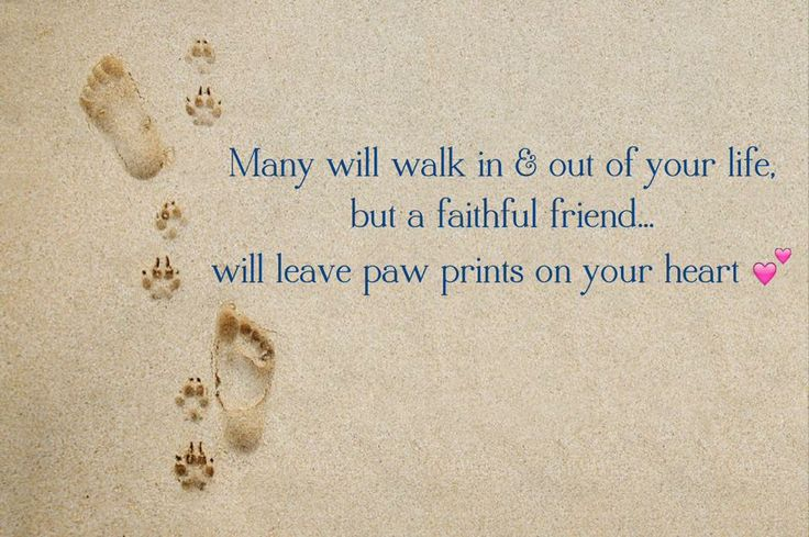 17 Best Images About Pet Memorial Sympathy Gifts On