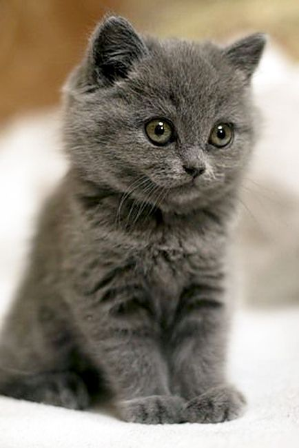 kittehkats:   Found on welovecatsandkittens.com