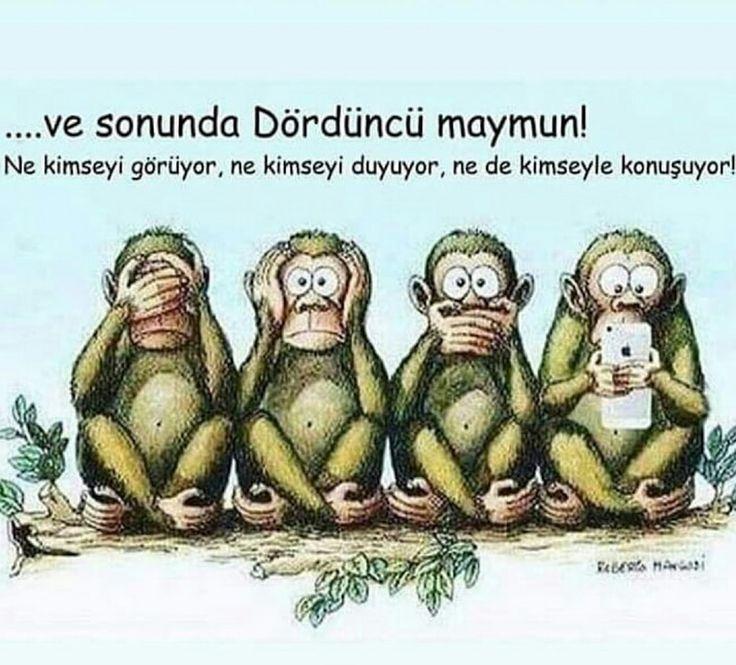 Bu da, dört maymun !
