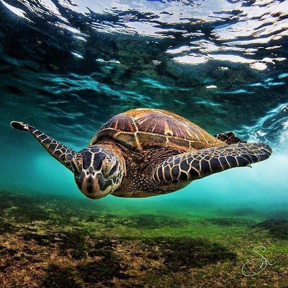 What Do Turtles Eat?   Turtle, Sea animals, Ocean animals