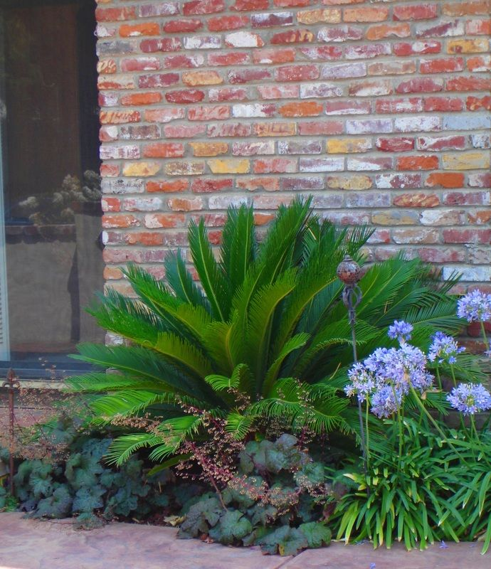 25 best sago palm ideas on pinterest for Local landscape designers