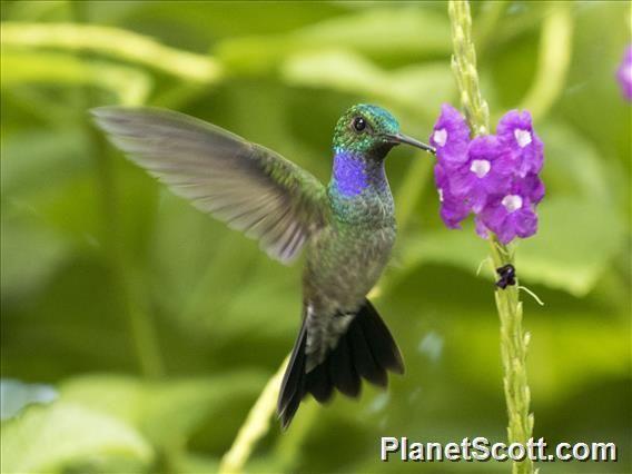 Parque Nacional Soberania, Panama - PlanetScott.com