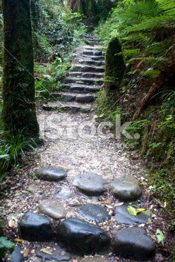 Footpath through Lush Green Flora Royalty Free Stock Photo