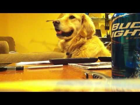 Golden Retreiver Loves Guitar! It is so cute watching this dog bop his head to the music with a smile on his face but completely stops when the music stops....Dad would've loved this...