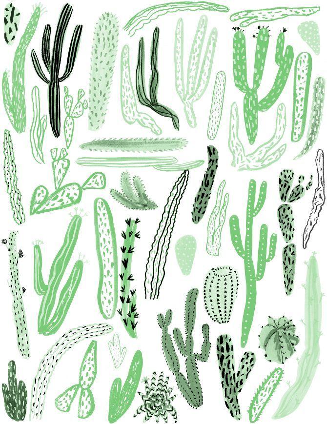 Cacti - Georgie McAusland
