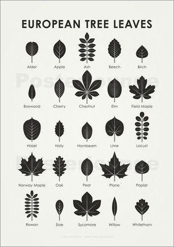 Iris Luckhaus - European Tree Leaves