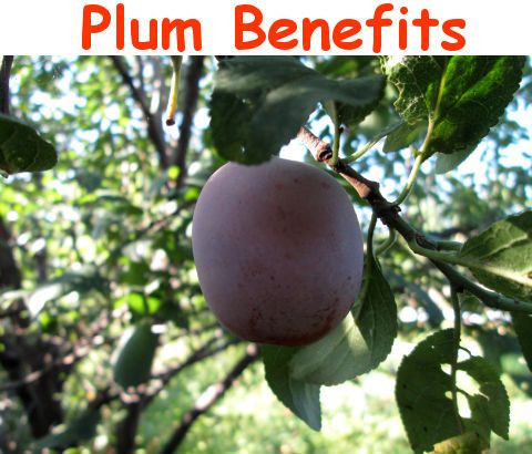 is a plum a fruit is eating fruit healthy