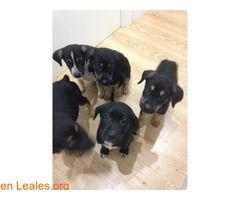 Perritos abandonados  #Adopción #adopta #adoptanocompres #adoptar #LealesOrg  Contacto y info: Pulsar la foto o: https://leales.org/animales-en-adopcion/perros-en-adopcion/perritos-abandonados_i2885 ℹ   Se han encontrado estos cachorritos en un contenedor de la basura. Están en Premia de Mar (Barcelona )  El teléfono de contacto es :626598493  Gracias por difundir    Acerca de esta publicación:   Esta publicación NO ha sido creada por Leales.org y NO somos responsables de su contenido. Ha…