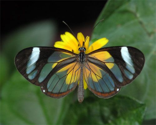 5 of the most fascinating butterflies