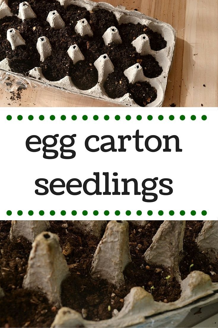 Get started on spring gardening with egg carton seedlings!