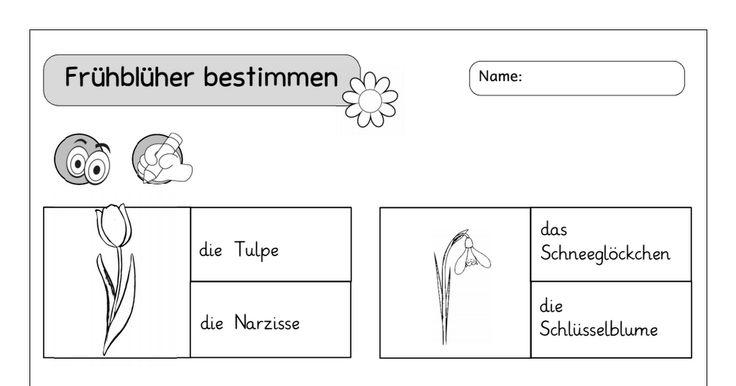 ABsStationen_Frühblüher_einfach.pdf