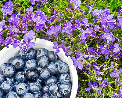 A close up of freshly picked blueberries in a garden of flowers