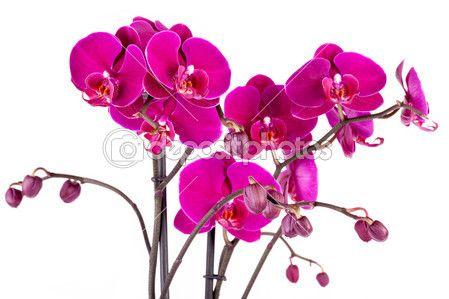orchidee viola — Immagine Stock #43171345