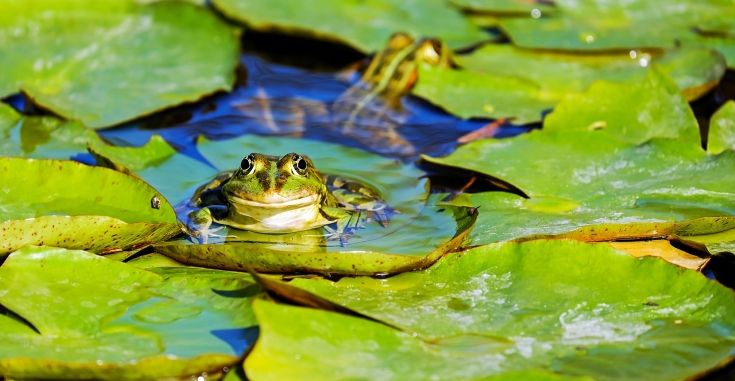 Blogs For Self Publishers February 10 16 2018 Frog Pictures Animals Amphibians