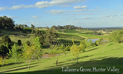 Offering one of the Hunter Valley's most outstanding wine tasting venues, experienced and passionate staff will guide you through the wines, whilst you sit back and take in the best view in the Hunter Valley.