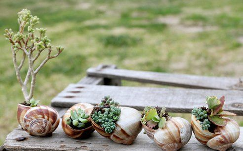 How to DIY Adorable Snail Shell Miniature Gardens : TreeHugger