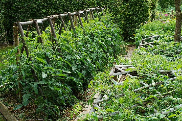Pieds de tomate dans le potager 6 jardin potager et astuces jardin pinterest tuteur - Distance entre pied de tomate ...