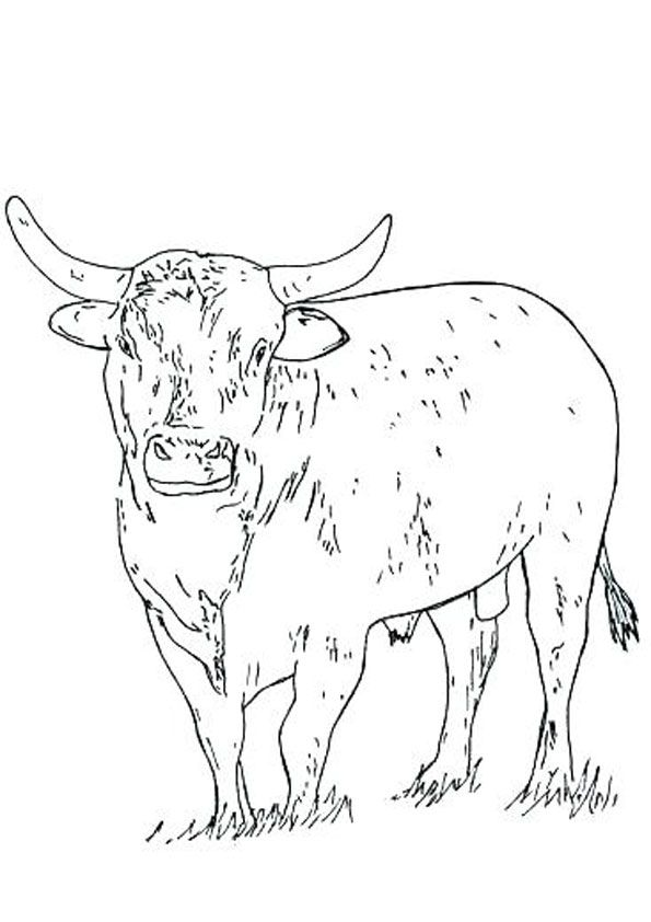 Bull Coloring Page For Kids Coloring Pages Coloring Pages For Kids Precious Moments Coloring Pages