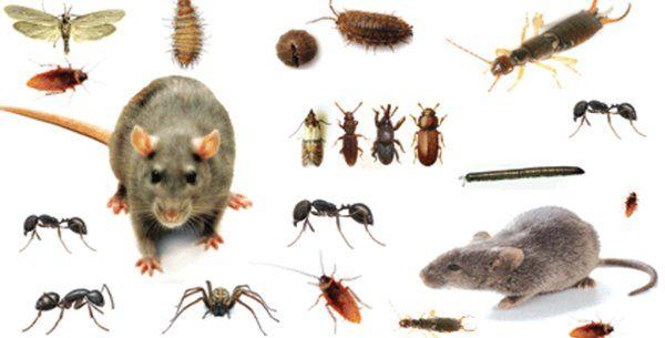 Voici Comment repousser les insectes de chez soi sainement sans utiliser des produits chimiques