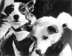 Belka and Strelka– 50 Years Since Space Dogs Circled the Earth ~ Kuriositas