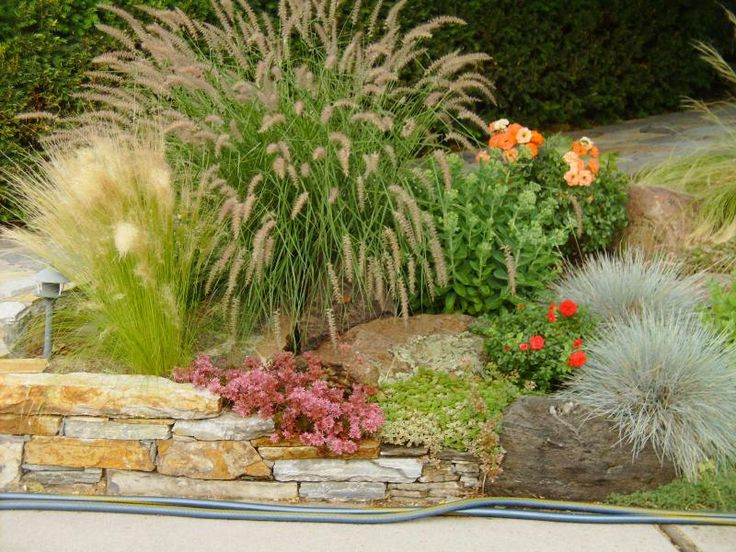 23 best xeriscape images on pinterest for Xeriscape images