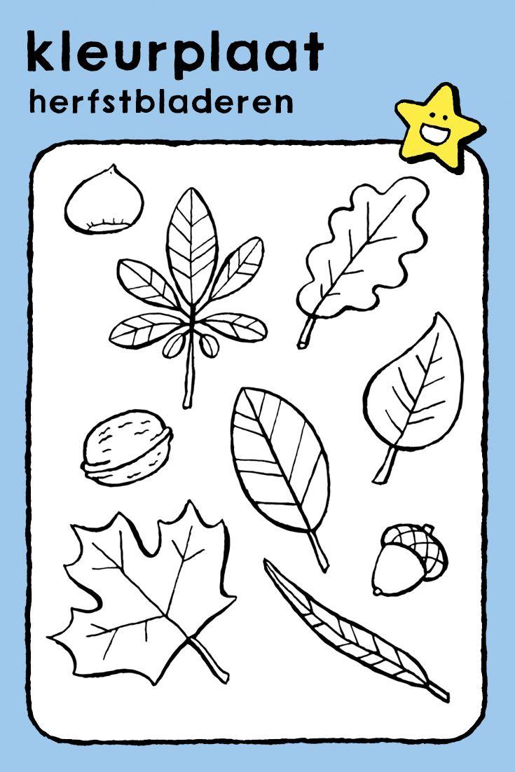 herfstbladeren kleurplaat kleurprent tekening kinderen