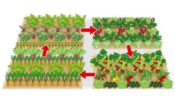 die besten 17 ideen zu mischkultur auf pinterest bepflanzung g rtnern und pflanzung eines garten. Black Bedroom Furniture Sets. Home Design Ideas