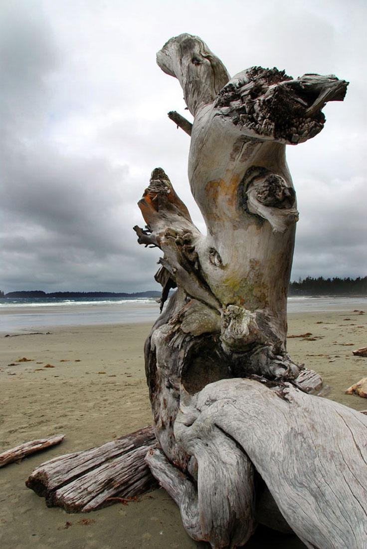 Wickaninnish Beach, Tofino BC  _  Bailey Zimmerman