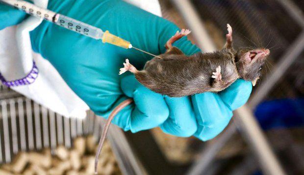 Forsøgsdyr er en fast del af udviklingen af medicin. Spørgsmålet er om det er ok at bruge forsøgsdyr eller om brugen skal sættes ned?
