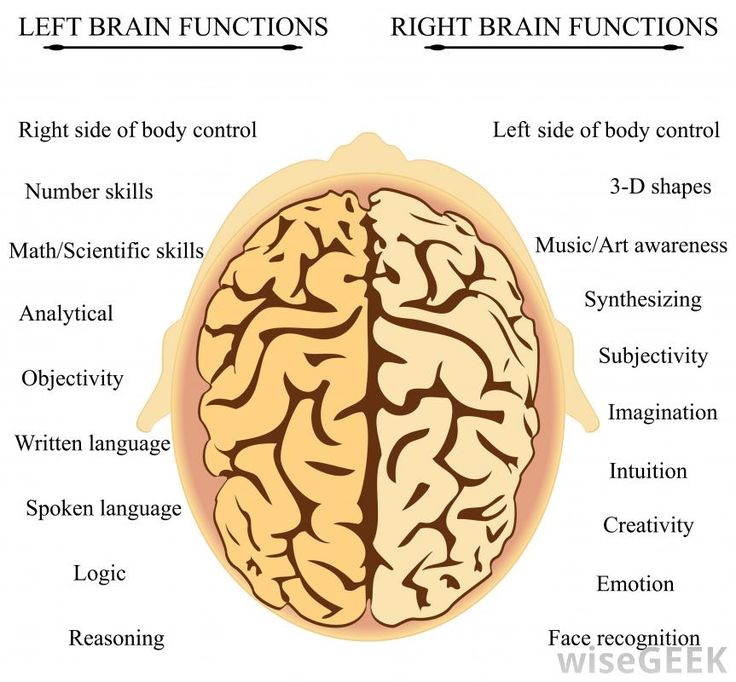 72 best images about brain on Pinterest