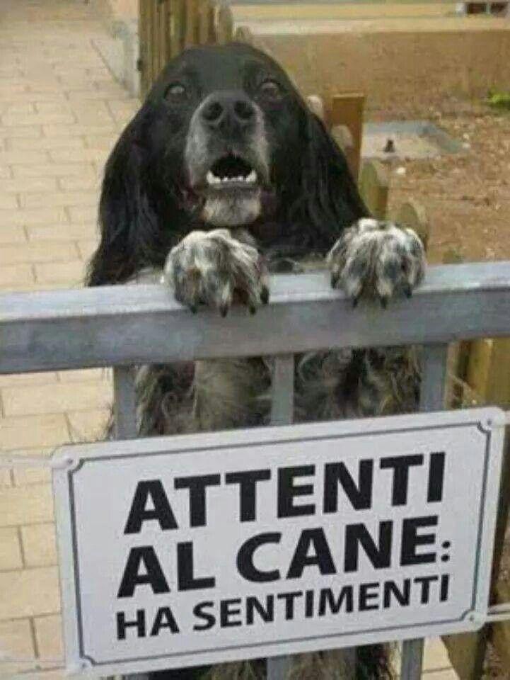 Beware of the dog...has feelings!