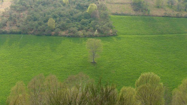 The Xosé Tree XD