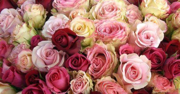 صور بوكيه ورد 2017 أجمل أنواع أنواع الورود الطبيعية مع أحلى صور ورد للفيس و الواتس بفبوف Rose Flowers Rose Tattoos