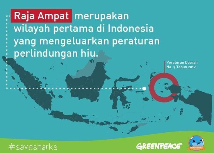 Siapa yang ingin melihat hiu dilindungi di lebih banyak tempat di Indonesia? Menjaga hiu menjaga masa depan laut kita.