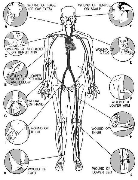 Best Way to Stop Bleeding | Artery pressure points