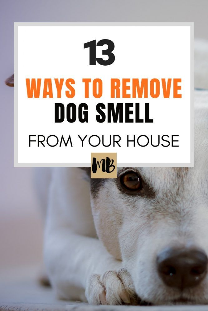 13 Ways To Remove The Dog Smell From Your House Dog Smells Dog Odor Remover Dog Odor Eliminator