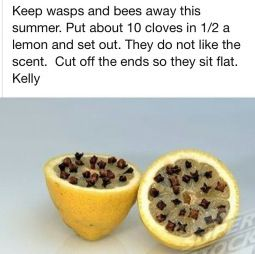 Wasp Repellent. Had one wasp in the patio yesterday. Just to be prepared.