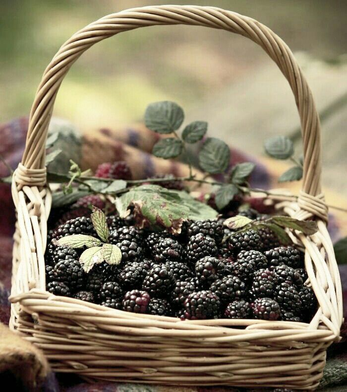 I used to love to pick blackberries with my Mother when I was young. I loved the berries fresh...but mainly cooked in one of her awesome cobblers! Wow....memories.