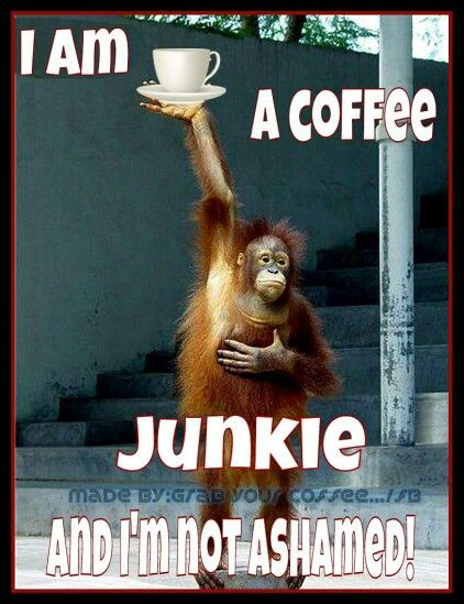 Coffee...Junkie...Day or Night...Hot or Cold...Any Flavor! I don't care for just black coffee.