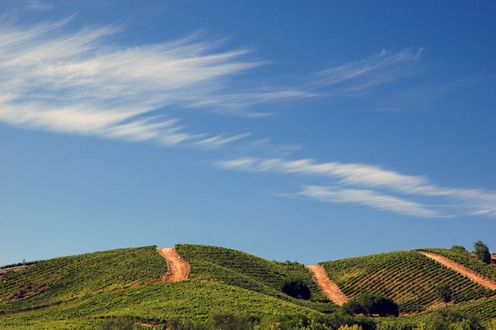Wispy clouds over the vineyard hills of Kingston.