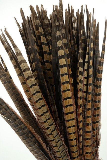 Pheasants' plumes are superior to those of all other fowl, in my humble opinion.
