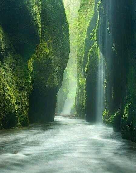 Rainforest Canyon, Oregon, USA